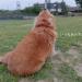 犬の万能薬 ビオフェルミン 口臭・歯周病・肥満予防にもOK!