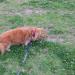 セアカゴケグモが増えている?!犬の散歩に要注意!